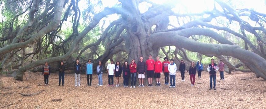 Our Great Oak
